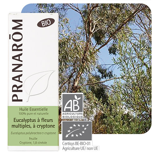 Huile essentielle Eucalyptus à fl. multiples à cryptone - feuille BIO 10 ml