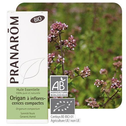 Huile essentielle Origan à inflorescences compactes - sommité fleurie BIO 10 ml