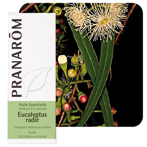 Huile essentielle Eucalyptus radié - feuille 100 ml