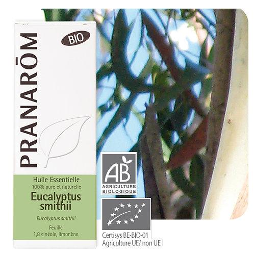Huile essentielle Eucalyptus smithii - feuille BIO 10 ml