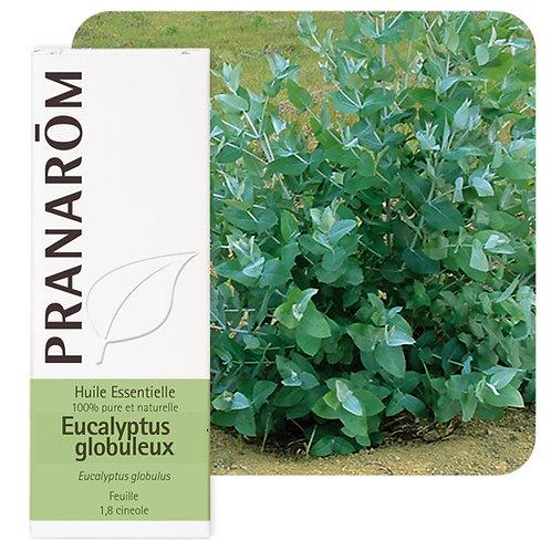 Huile essentielle Eucalyptus globuleux - feuille 30 ml
