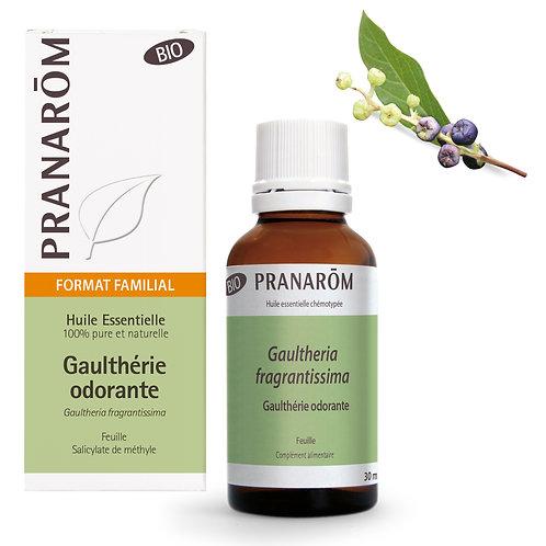 Huile essentielle de Gaulthérie odorante