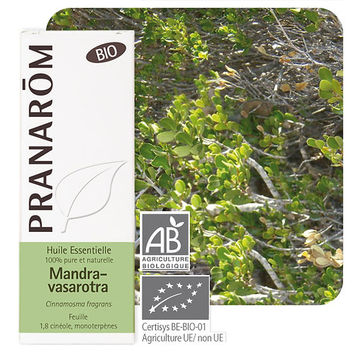 Huile essentielle Mandravasarotra - feuille BIO 10 ml