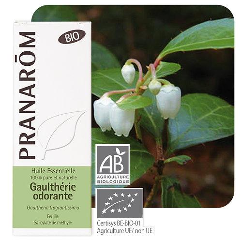 Huile essentielle Gaulthérie odorante - feuille BIO 10 ml