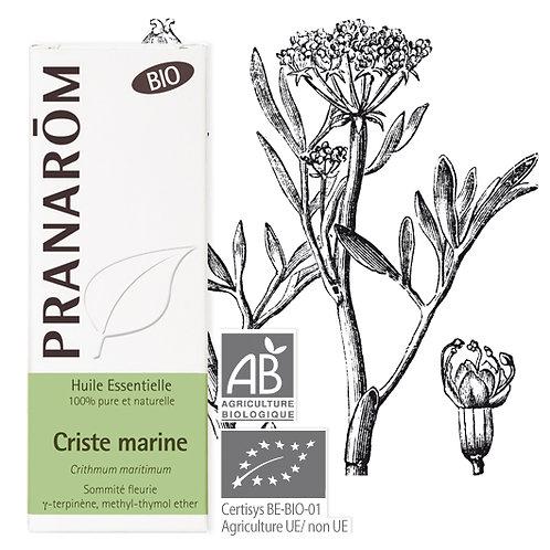 Huile essentielle Criste marine- - sommité fleurie BIO 5 ml