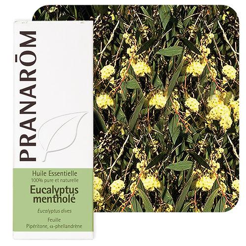 Huile essentielle Eucalyptus mentholé - feuille 10 ml
