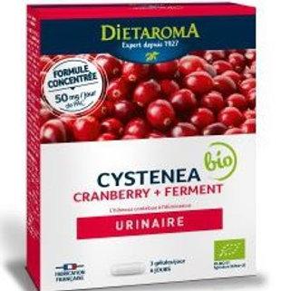 Cystenea Duo 20 gélules