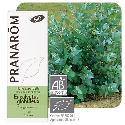 Huile essentielle Eucalyptus globuleux - feuille BIO 10 ml