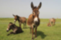 Testimonial The Donkey Sanctuar
