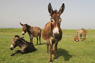 Testimonial The Donkey Sanctuar