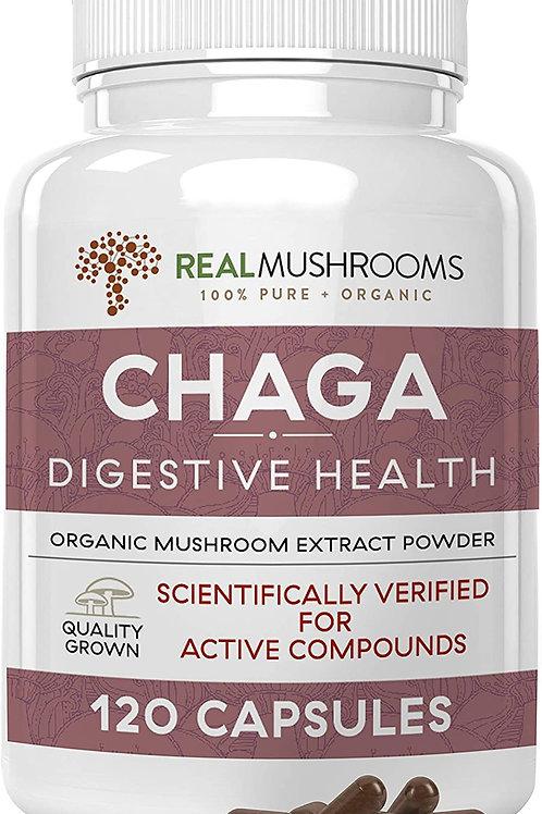 Chaga: Digestive Health