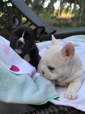 Penny's Puppy's