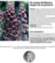 Fritillaria bulbs planting flowers willemijn franska