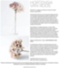 Roos Soetekouw hortensia flowers willemijn franska