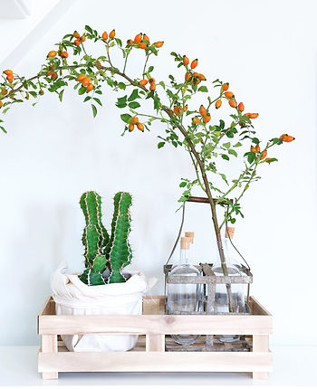 Flowerstories DIY idea branch rosebutt cactus box