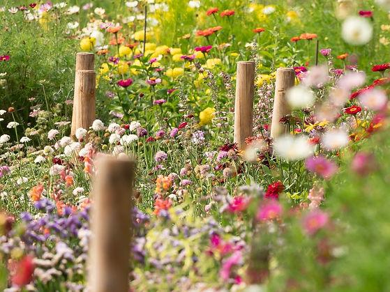 Ria Lambregts bloemen.jpg