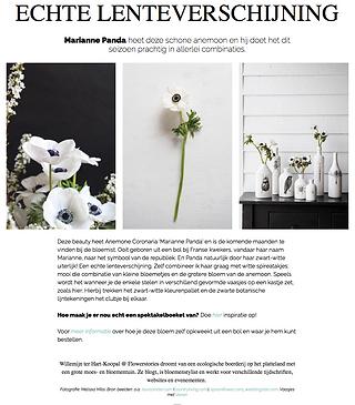 Black and white spring anemone flowers willemijn franska