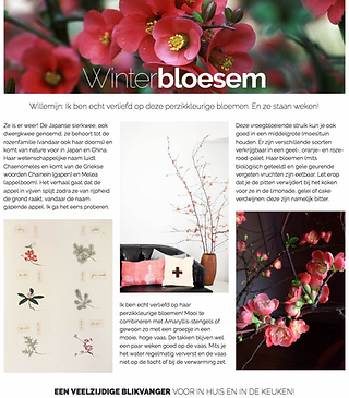 quince branch winter japanese flowers willemijn franska