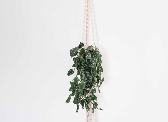Suay Macramé Plant Hanger / Made to order 5 working days