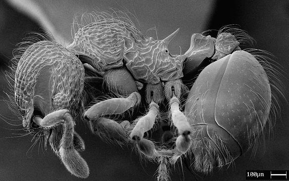 Laboratório de Sistemática e Biologia de Formigas