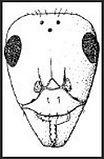 Formis: Sítio online do projeto Formis, com um banco de dados extenso contendo literaura de formigas.