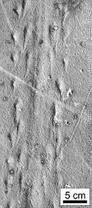 footprints_160.jpg