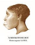 220px-Nariokotome_Boy_Reconstruction.jpg