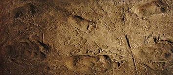 1280px-Laetoli_footprints_replica.jpg