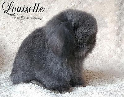 LOUISETTE 1 mes.jpg