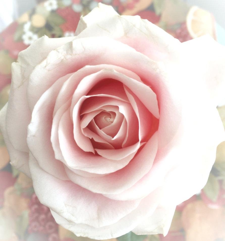 rose fin modif