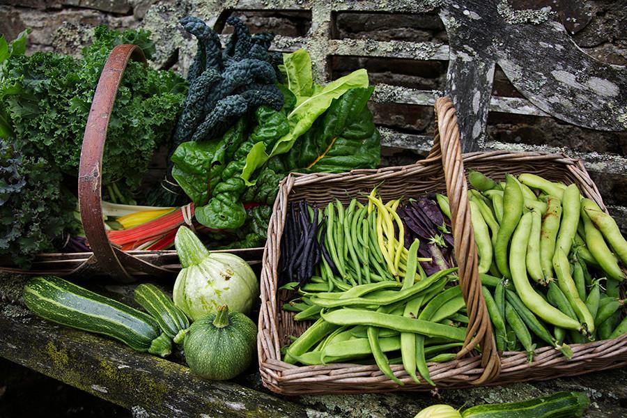 WEB_FRIENDLY_Fisherton_Farm_Vintage_Vardos_D46A4518_Andrew_Ogilvy_Photography.jpg