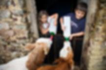WEB_FRIENDLY_Fisherton_Farm_Vintage_Vardos_D46A3656_Andrew_Ogilvy_Photography.jpg