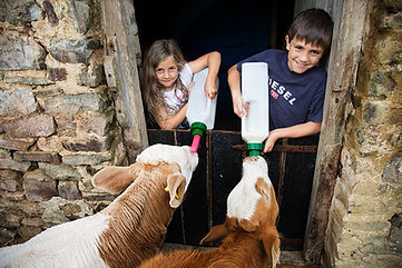 WEB_FRIENDLY_Fisherton_Farm_Vintage_Vardos_D46A3656_Andrew_Ogilvy_Photography.jpg