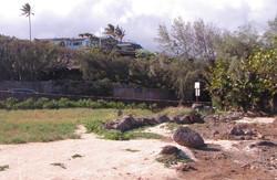 FSL_habitat1.jpg