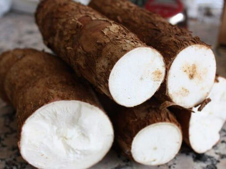 Gobernación de Sucre lanza convocatoria para productores de yuca