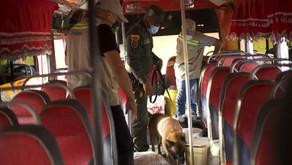 Aumentan controles en vías para frenar tráfico de animales silvestres