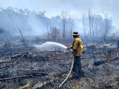 Bomberos y brigada forestal de Isla de Salamanca atienden incendio