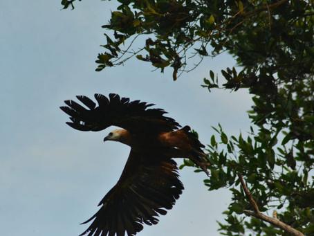 El hogar de paso que resguarda de la sequía fauna de la Ciénaga de Santa Marta