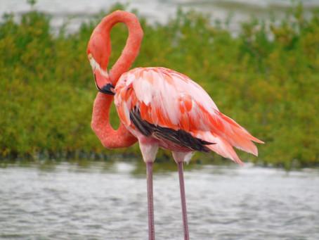 Santuario de la Guajira y 3 áreas naturales abren para semana santa.