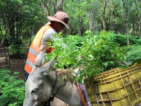 La Guajira es reforestada con 175.000 árboles