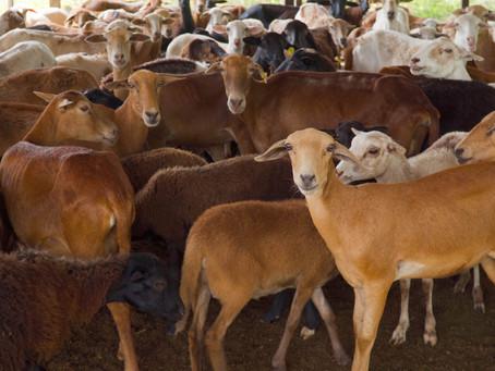 La granja en la Guajira donde 193 excombatientes de las FARC-EP se reincorporan
