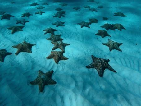 5 areas marinas que nacen al norte del Caribe