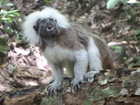 Liberan especies de fauna silvestre en Santuario de Bolívar