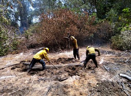 Un total de 102 hectáreas  fueron las afectadas por el incendio de la Isla Salamanca