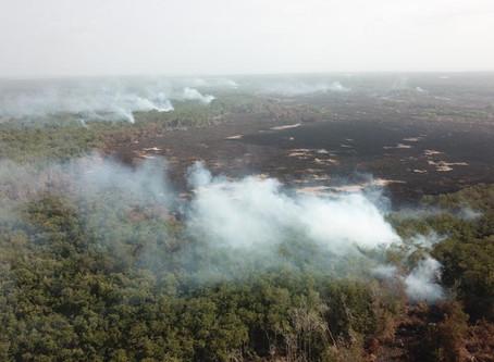 Se estima unas 10  hectáreas afectadas en la Isla Salamanca