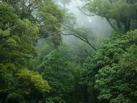 Colombia y su diversidad, son anfitriones en el Día Mundial del Medio Ambiente