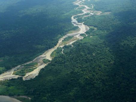 IDEAM: en el 2019 se redujo la deforestación en los Parques Nacionales Naturales de Colombia