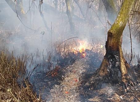 """Helicóptero """"Bambi"""" ayuda a mitigar el incendio en la  Isla de Salamanca"""