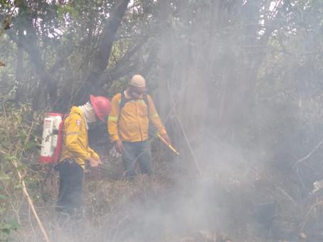 Se plantea militarizar la Isla Salamanca por quema de mangles
