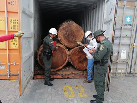 Más de 380 metros cúbicos de madera han sido incautados durante 2021 por EPA Cartagena